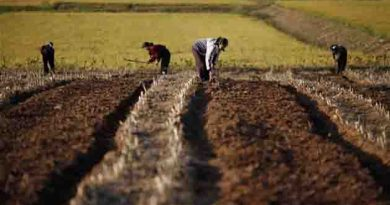 North Korea's food harvest lowest in a decade :The United Nations .